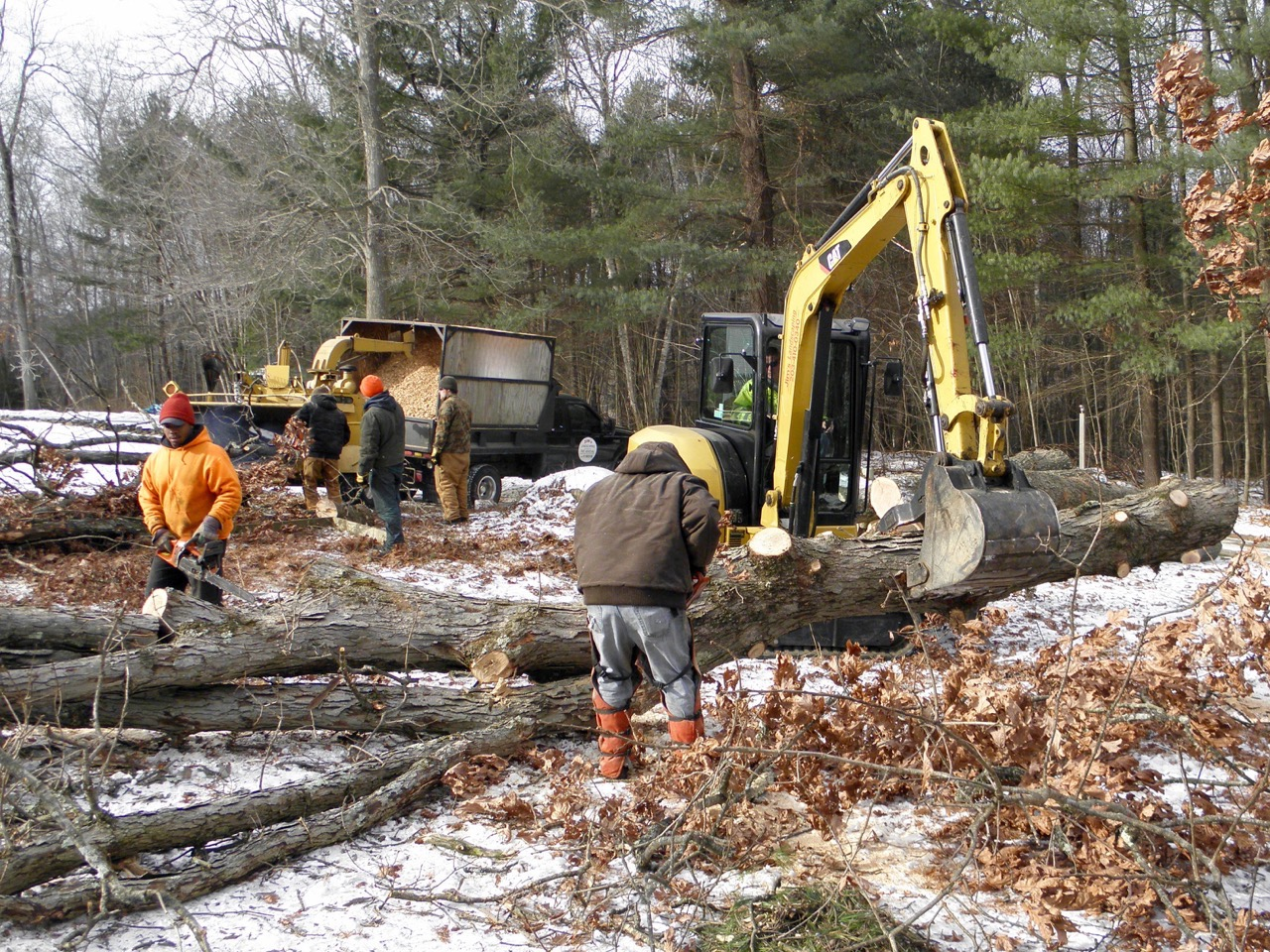 Picking a Tree Service Specialist