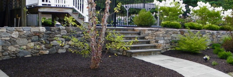 walkway stairs and birch tree with limelight hydrangea